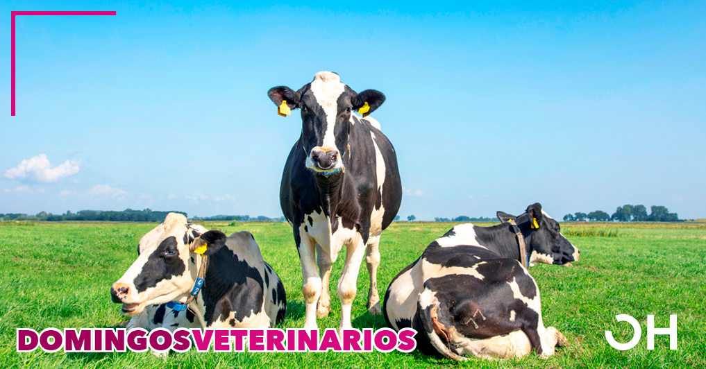 Tratamiento con ozono de metritis y endometritis en vacas Holstein.