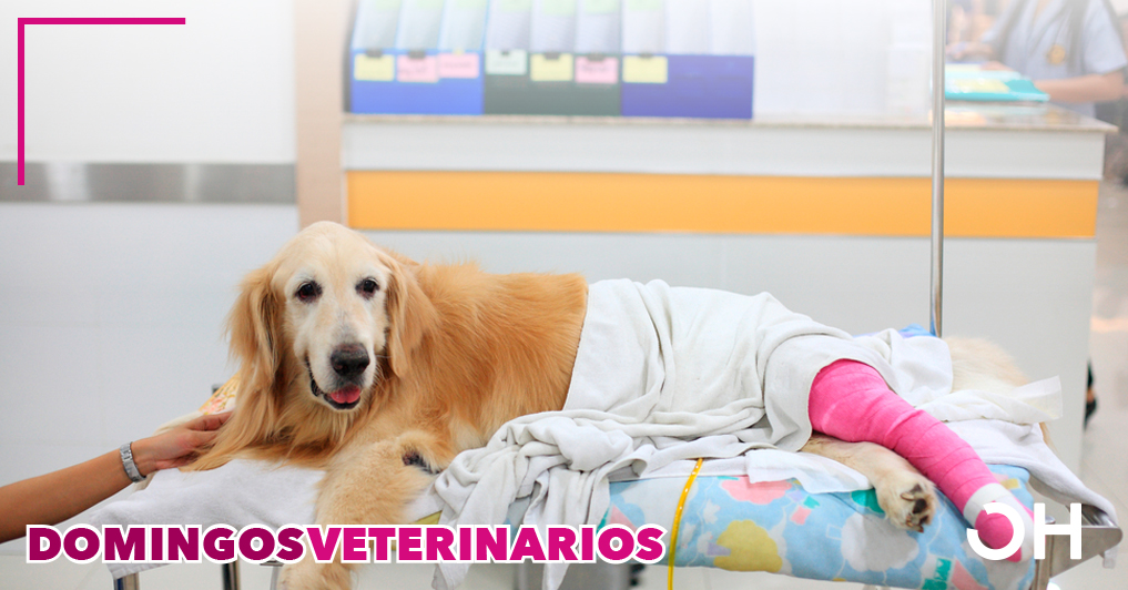 Efecto de la ozonoterapia y aceite ozonizado en herida traumática canina