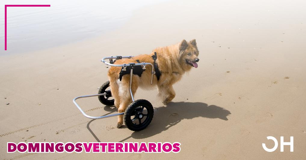 Uso de ácido hialurónico reticulado solo o asociado con gas ozono en el tratamiento de la osteoartritis debida a displasia de cadera en perros