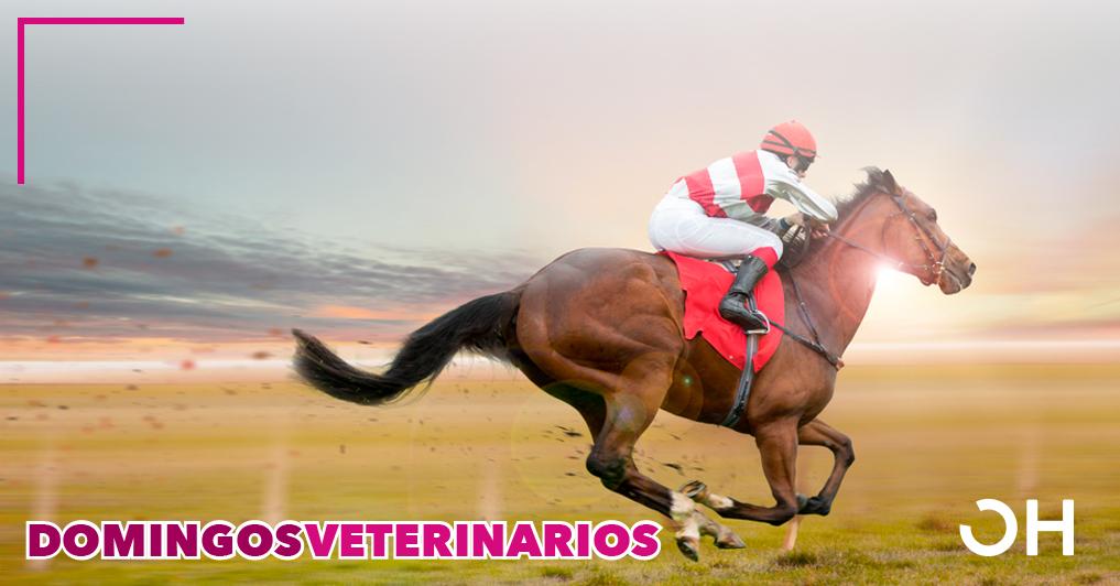 Aplicaciones clínicas del ozono en caballos de México